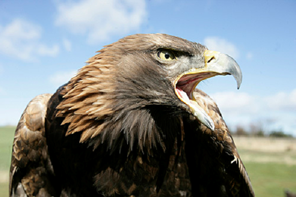 Cherish the Golden (Eagle) Moments