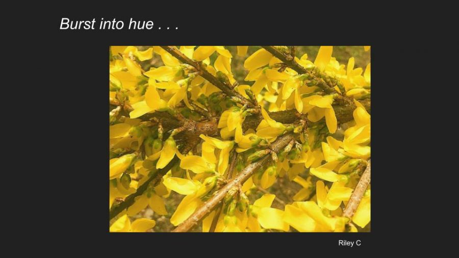 Signs of Spring: Digital Photography Students Explore the World Outside
